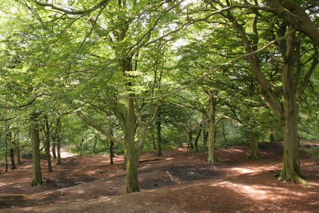 Royds Hall Great Wood