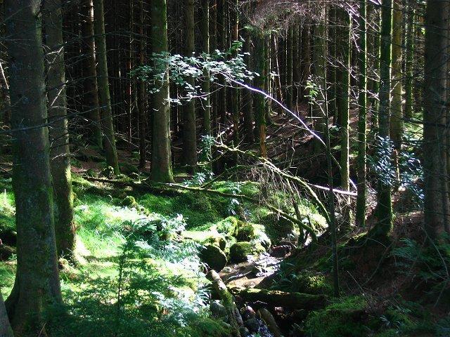 Forest near Clachaig