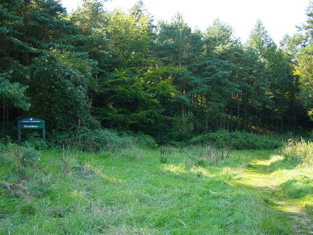 Blackdown Woodland