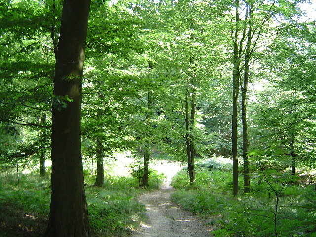 Challock Wood