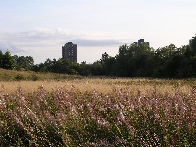 Wild Grasses and Tower Blocks