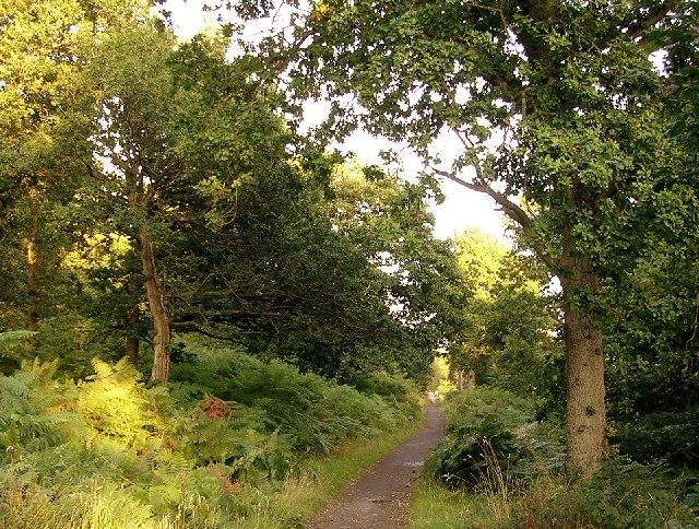 Garscadden Wood