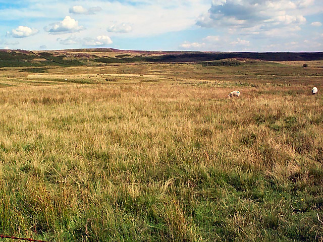 Low Bradup, Morton Moor