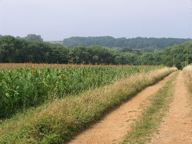 Bridleway and crops, Pegglesworth Home Farm