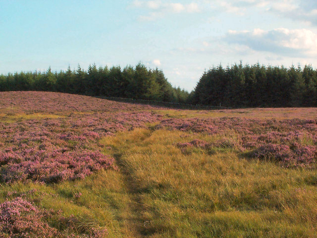 Plantation at Shepherd's Hill, Rombalds Moor