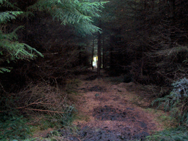 Plantation, Rombalds Moor