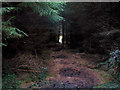 SE0845 : Plantation, Rombalds Moor by David Spencer