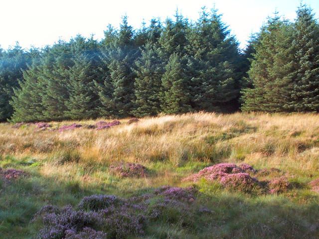 Sike Head, Plantation, Rombalds Moor