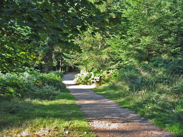 Footpath in Bolderwood Grounds, New Forest.