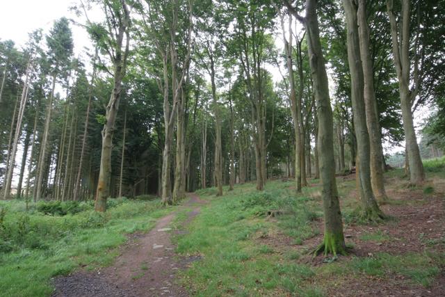 Dronley Wood