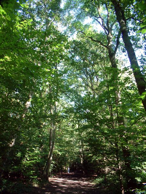 Leafy Grove, Selsdon Wood CR0