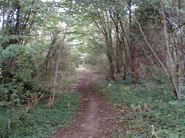 Woodland on the Cuckoo Way