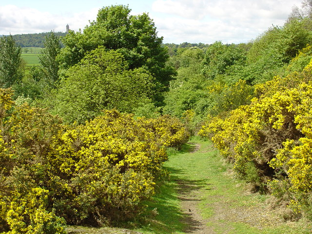 Old Drovers Path at Cotkerse