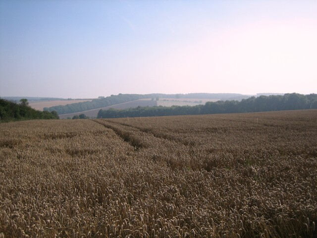Field of Wheat, Stanway Ash