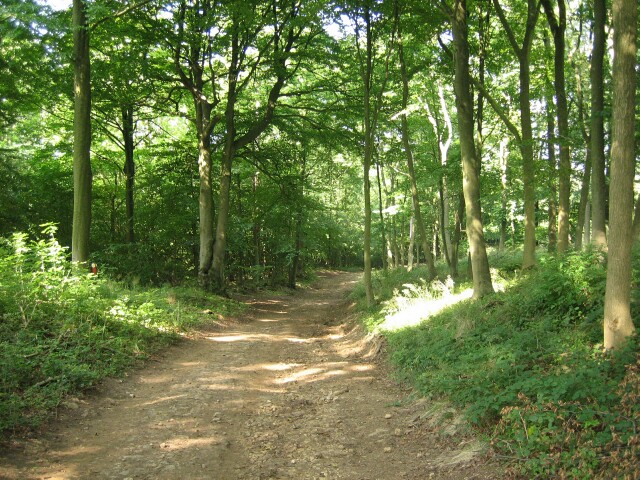 Source: Geograph.org / woodland path Stanway Hill - http://s0.geograph.org.uk/photos/04/87/048787_4f2e9bea.jpg