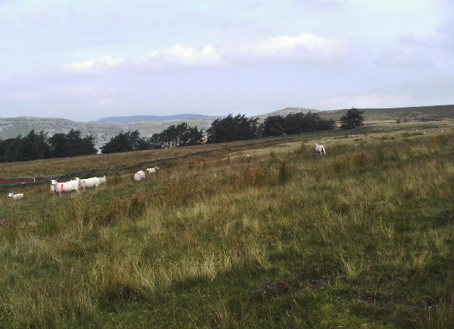 Hanlith Moor