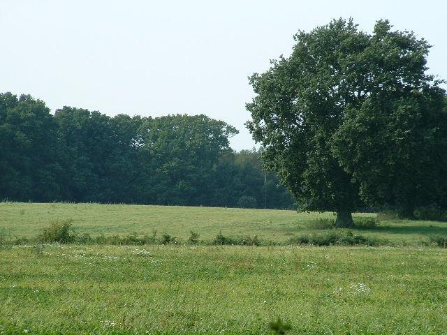 Nr Rackham  Plantation
