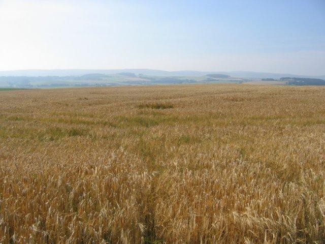 Barley, Mount Cottage.