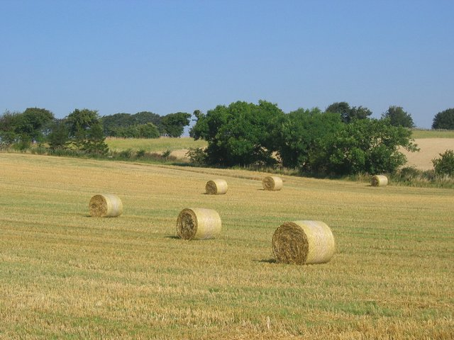 Straw bales, Wright's Houses.