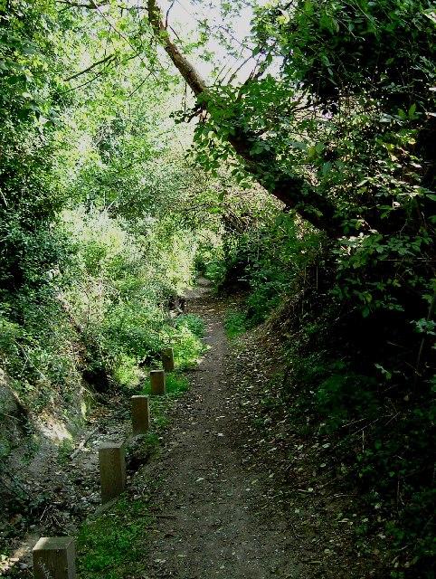Footpath Through Darenth Wood