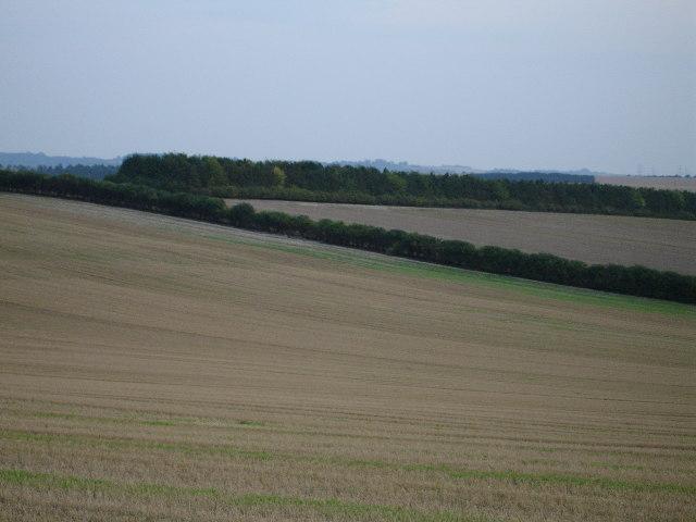 Ash Hill Plantation