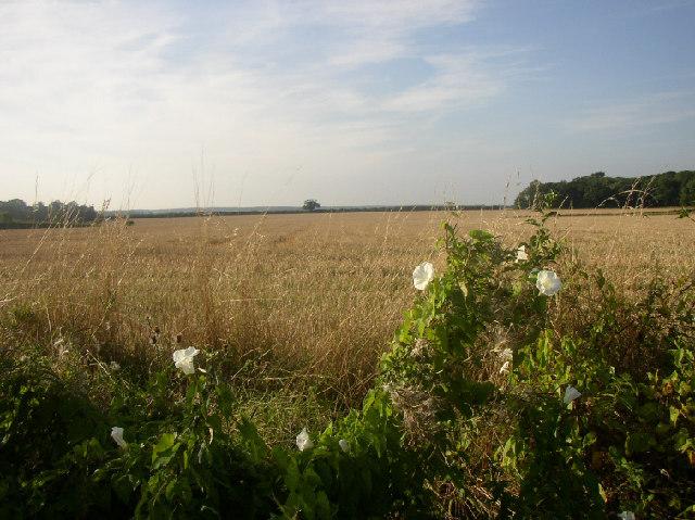 Near Great Thurlow, Suffolk