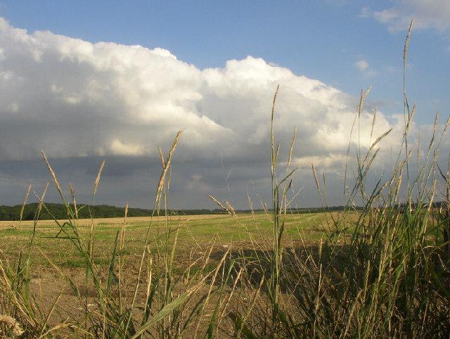 Fields, Burrough Green, Cambridgeshire
