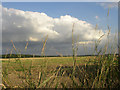 TL6454 : Fields, Burrough Green, Cambridgeshire by mike