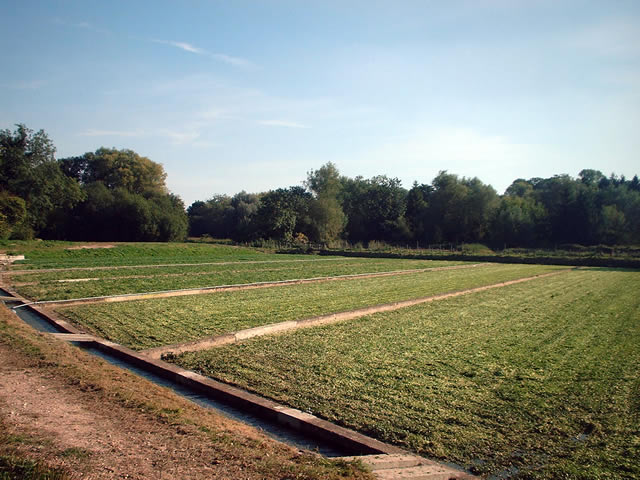 Watercress beds, Headbourne Worthy