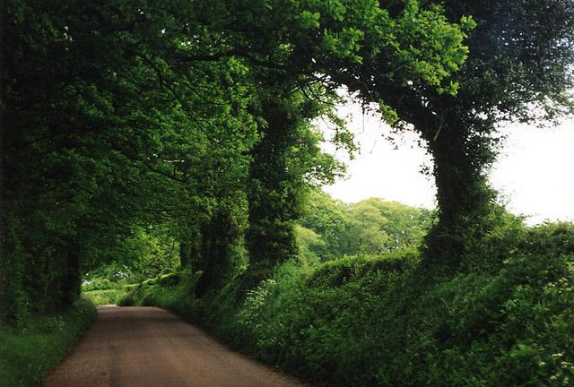 Cullompton: road from Birchen Oak