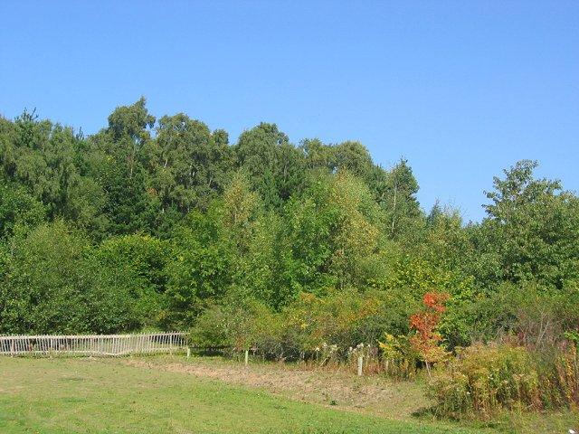 Gore Glen Woodland Park