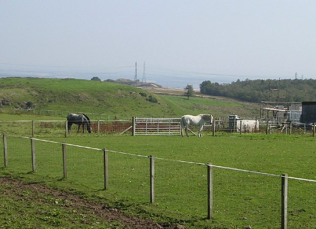 Horses at West Muirhouses