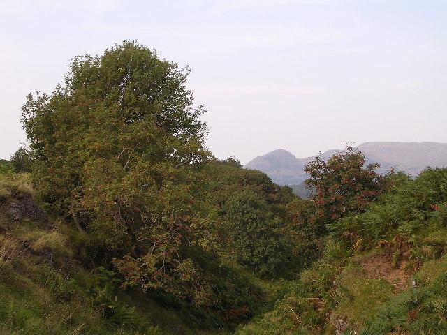 Cleft of Rowan Trees
