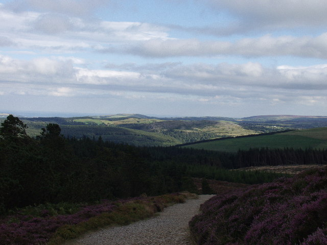 Forest track within the Clwyd Forest