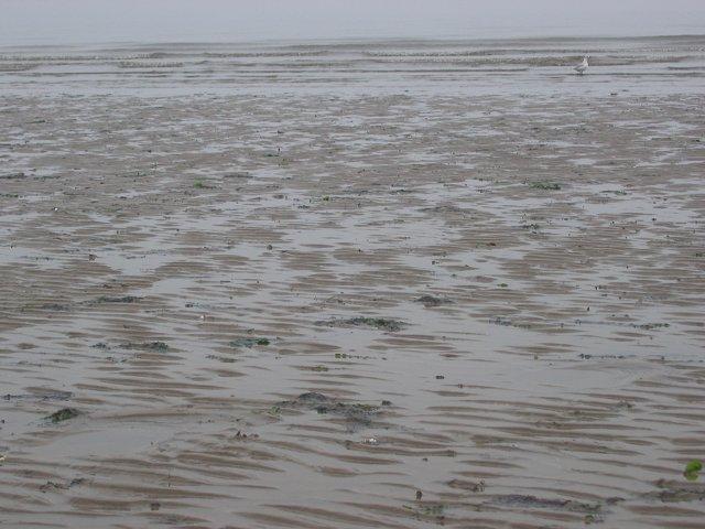 Beach, Seafield.