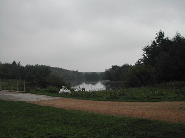 Swans on the Mill Lakes