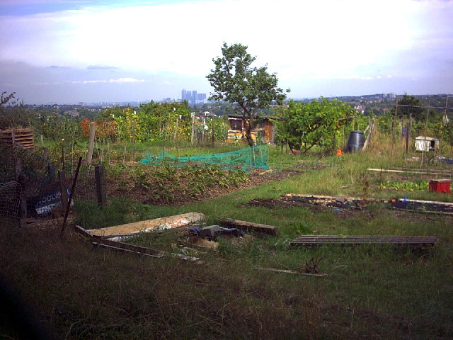 Rosendale Allotments on Knight's Hill.