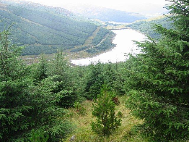 Forest above Loch Tarsan.