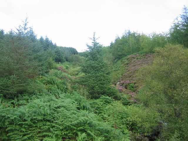 Forest, Glen Lean.