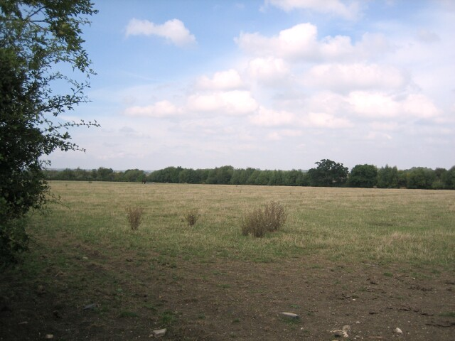 Field with distant horse