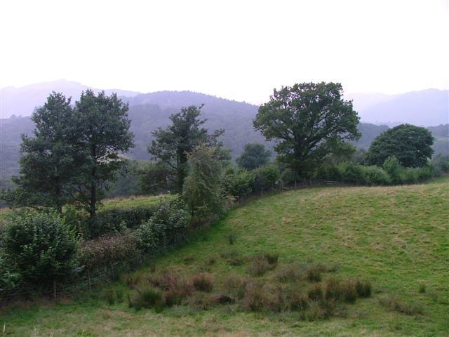 Lowland Pasture, near Park Farm