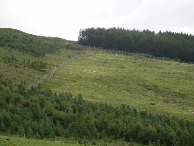 Forestry plantations, Achnasheen