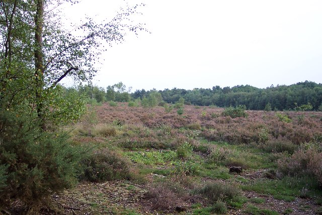 Pirbright Common