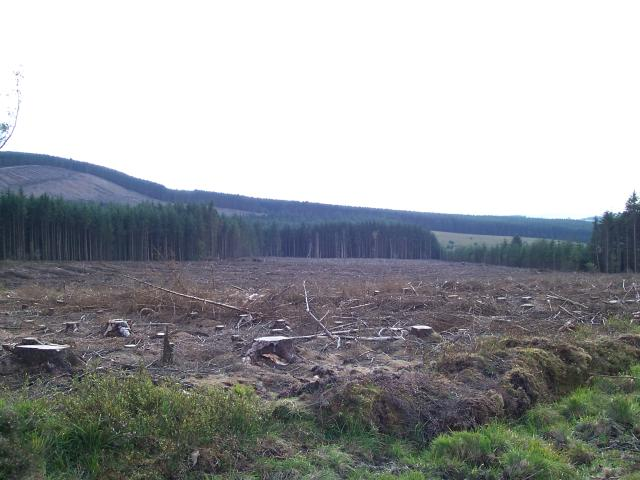 Forest Clearing
