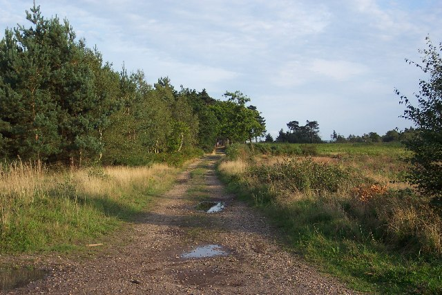 The army training area on Pirbright Common