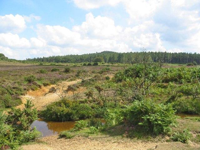 Ditchend Brook at Ditchend Bottom