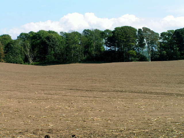 Prepared Field