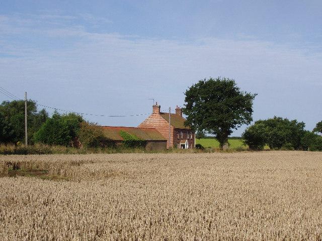 Ripe cornfield near Fulmodeston