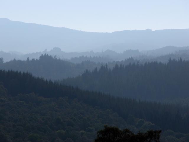 Achray Forest