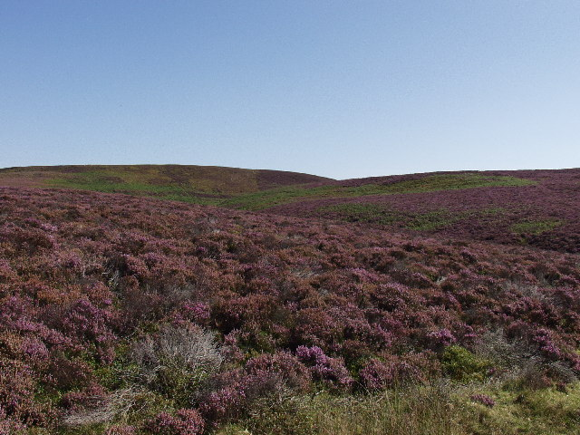 Moorland on Esclusham Mountain